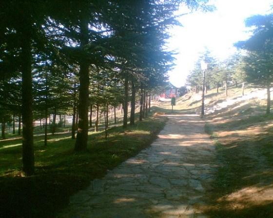 Parc de Ben Chicao, un patrimoine à l'abandon