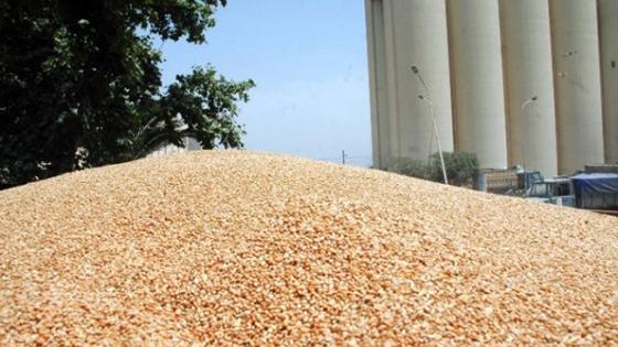 L'Algérie autosuffisante en blé dur à partir de 2019