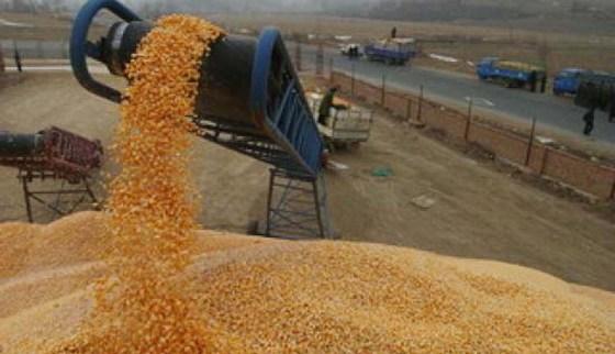Baisse de la facture des importations de céréales