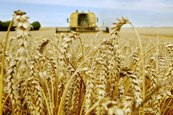 La facture des céréales en baisse