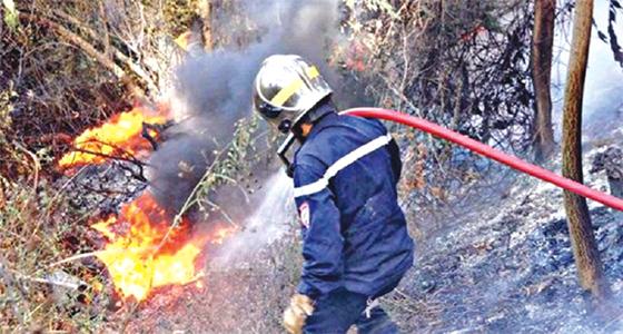 Béjaïa : Plus de 500 hectares détruits