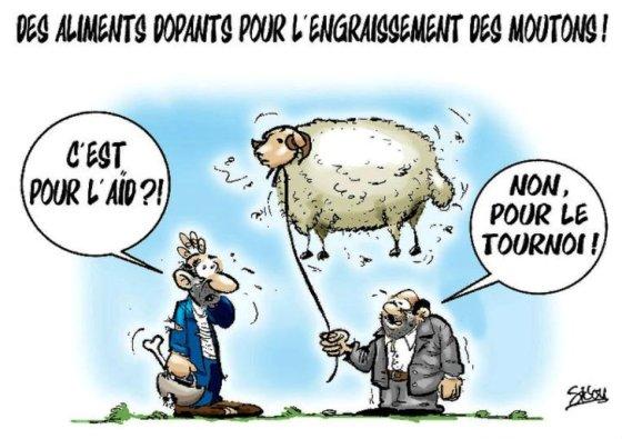 Des moutons dopés pour l'Aid