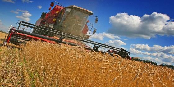 L'Algérie devrait importer 7,3 Mt de blé en 2016
