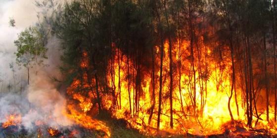 Feux de forêt : 8 555 hectares ravagés depuis le 1er juin