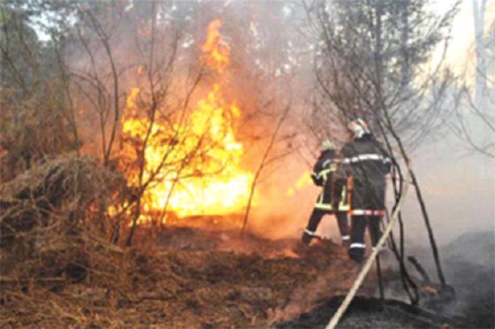 Feux de forêts : Plus de 1.400 palmiers détruits par les feux
