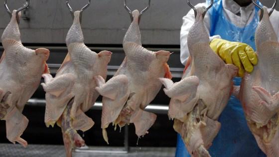 La hausse des  prix du poulet et des œufs perdure