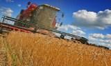 Indonésie: création de domaines agricoles géants pour assurer l'autonomie alimentaire