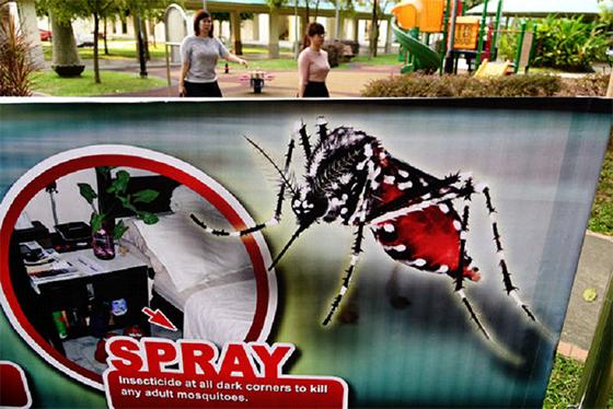 Malaisie : premier cas probable de transmission locale du virus Zika