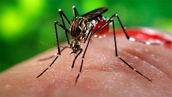 Zika: nouvel appel des autorités de santé pour que le Congrès américain vote des fonds