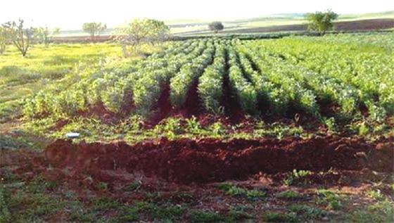 Exploitations agricoles et pastorales à Médéa