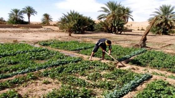 Encourager le rajeunissement de la main-d'œuvre agricole