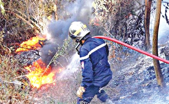 Béjaïa : Des dizaines d'hectares partis en fumée
