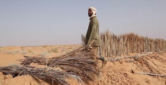 20 millions d'hectares de terres menacés de désertification