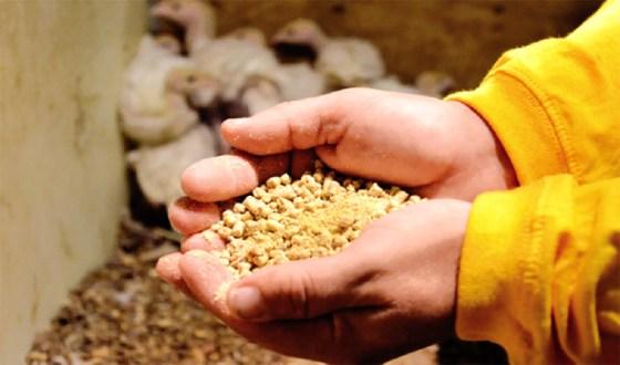 L'ONAB lance sa première unité de production d'aliments du bétail