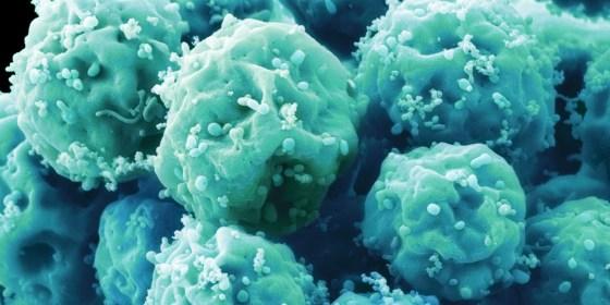 Des cellules souches dynamiques ont une signature génétique
