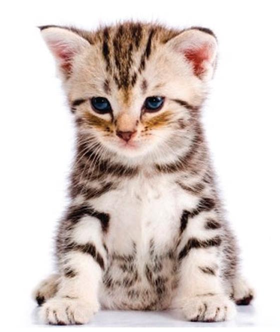 Le chat: un anti-dépresseur naturel ?