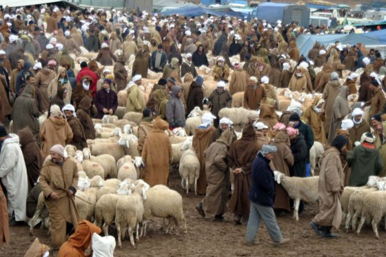 Aid El Adha: le mouton jusqu'à 60 000 DA