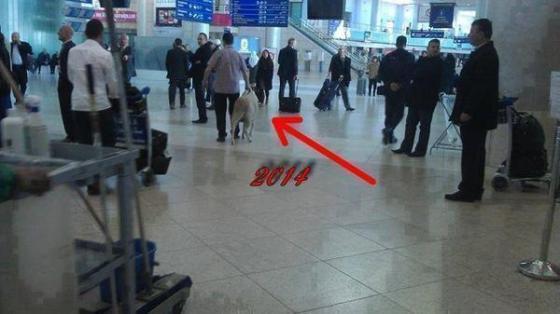"""Buzz: un """"mouton"""" à l'aéroport Houari Boumedienne"""