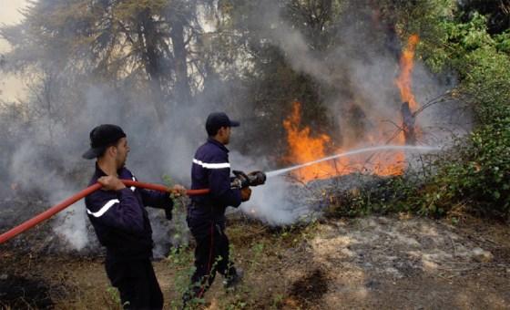 Des milliers d'hectares partis en fumée