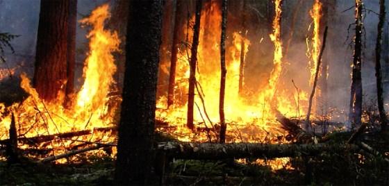 Les victimes des incendies seront indemnisées
