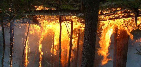 Feux de forêt : Plus de 6 000 ha touchés depuis le début de juin