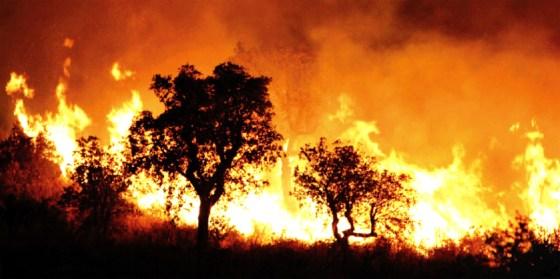 Incendies de forêt : la piste criminelle confirmée