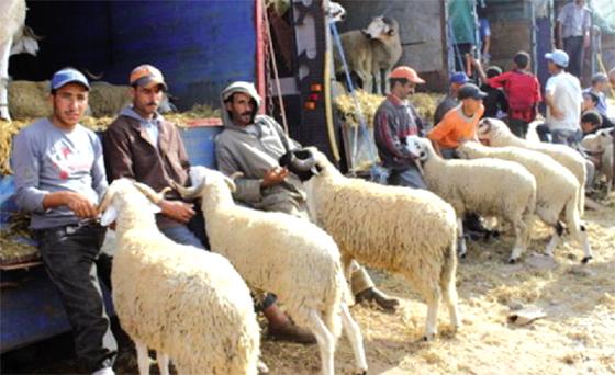 Installation de 23 sites de vente de moutons