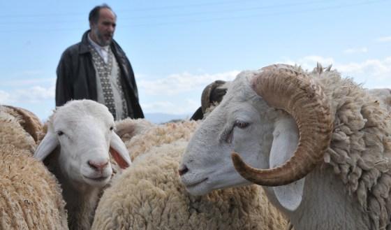 Les moutons de l'Aïd inondent le marché parallèle