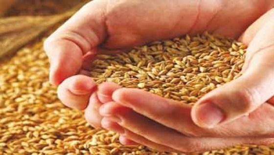 Céréales : plus de 35 millions de quintaux de production