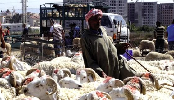 Mouton de l'Aïd el Adha : Les maquignons font la loi