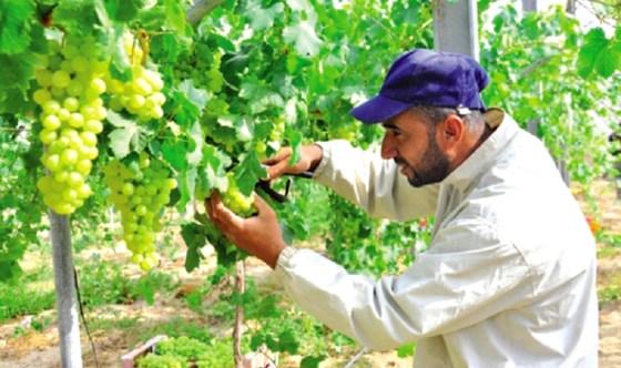 La production agricole évaluée à 30 milliards de dollars