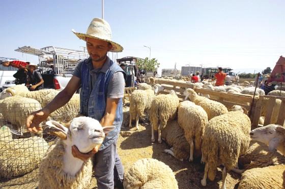 Forte hausse des prix du mouton