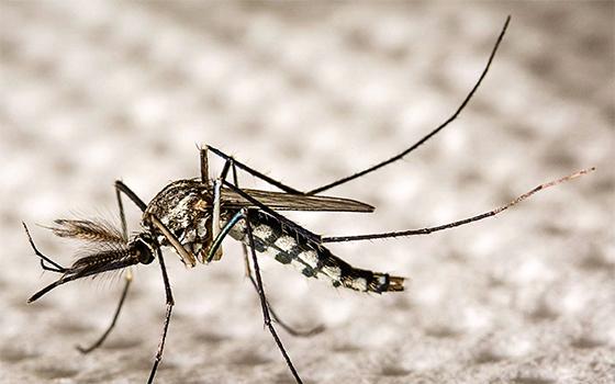 Le virus Zika pourrait devenir une arme contre le cancer du cerveau