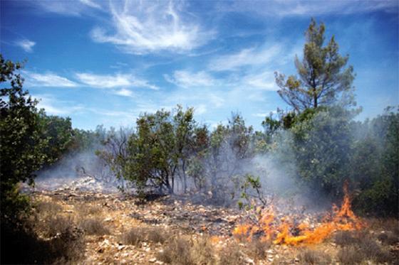 Médéa : 2 200 ha de forêt ravagés par les incendies