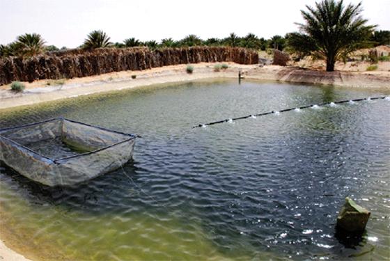 Agriculture : Encourager l'aquaculture dans le Sud