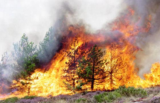 Feux de forêt : La date de l'indemnisation reste inconnue