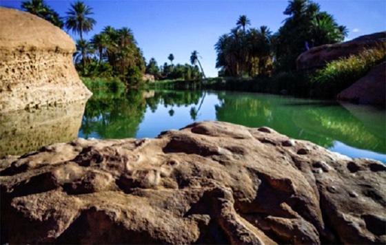 Tiout une destination touristique : Une oasis à valoriser