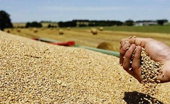 La production céréalière a dépassé 3,6 millions de tonnes