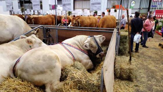 Salon de l'élevage : Les experts plaident pour un partenariat communautaire