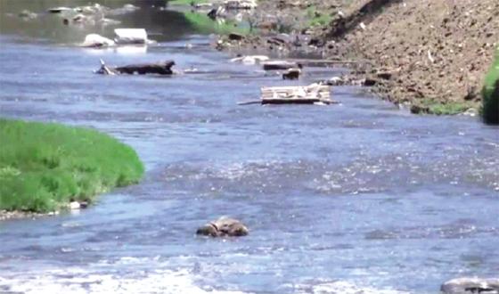 Pollution à Annaba : nouvelles mesures de contrôle opérationnelles