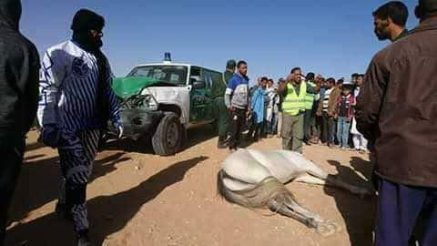 Triste accident dans une course de chevaux