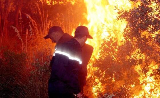 Feux de forêt : La DGF enclenche les indemnisations