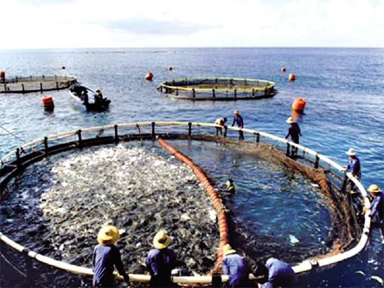 SIPA : 20 projets aquacoles ont bénéficié des garanties de crédits