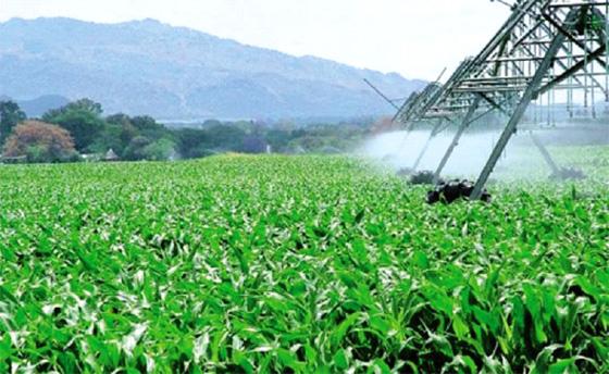 Des experts pour optimiser l'exploitation des terres salines