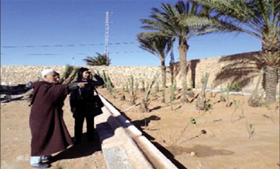 La wilaya récupère plus de 20 000 ha