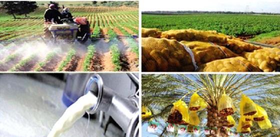L'Algérie assure plus de 70% de son alimentation par la production locale