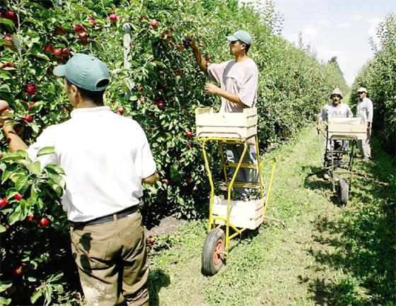 Agriculture : L'Etat intensifie ses efforts