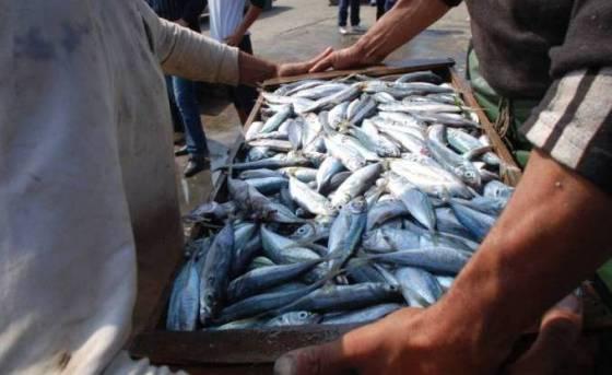 Pêche: Une production annuelle de plus de 100 000 tonnes