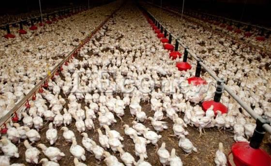 Réunion des vétérinaires à Constantine: Une halte sur la sécurité alimentaire