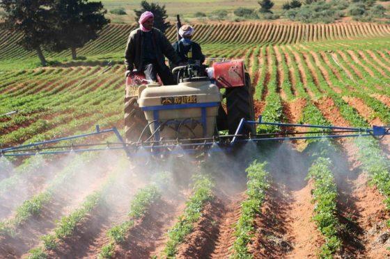 Des concessions agricoles pour les étrangers